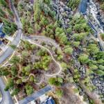 Pine Aerial
