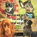 DogParkMeetUp2